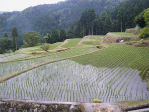 Tanada1